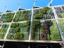 How to Vertical Garden