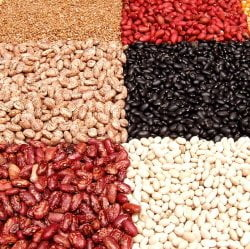 different types of legumes